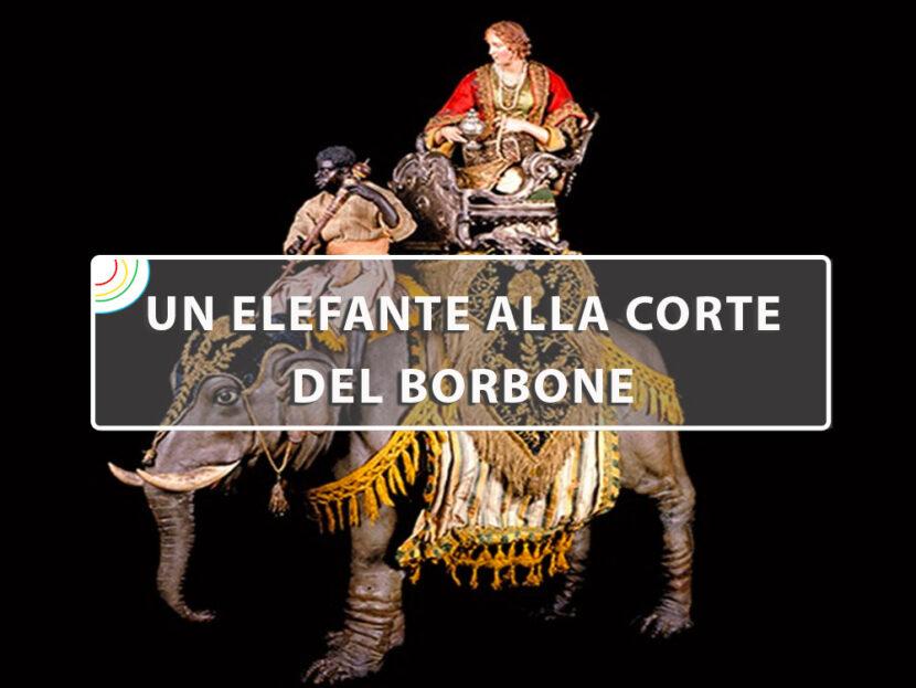 elefante-borbone